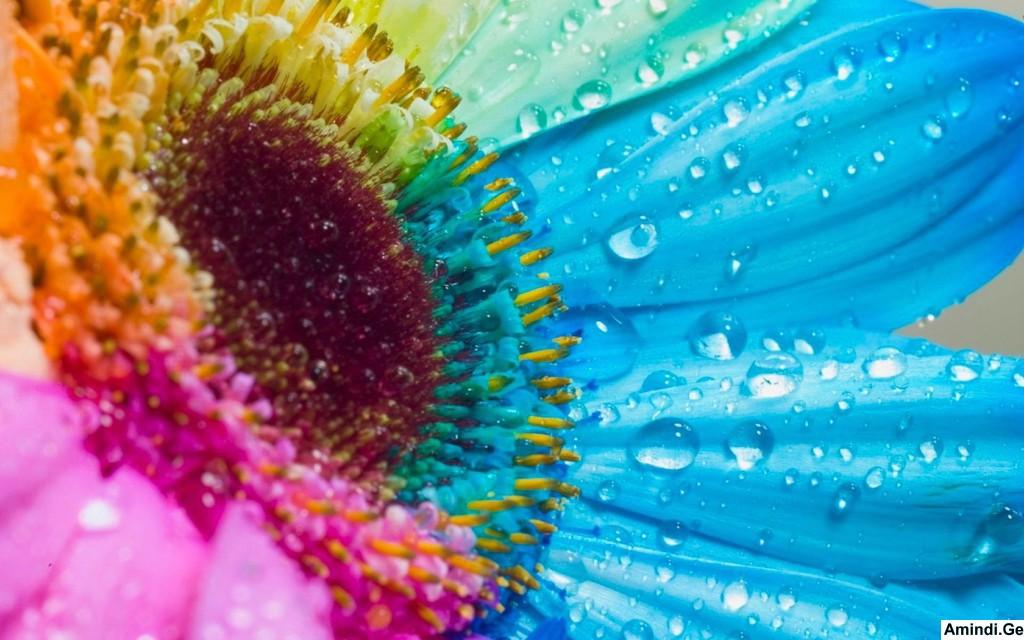 Картинки радужные цветы 7